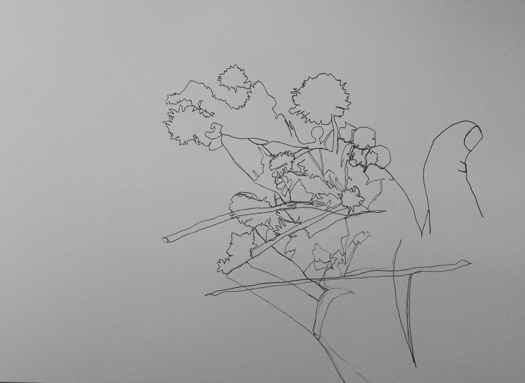 Desert Flower Study 3, (Continuous Line and Outline), Pen, 2014