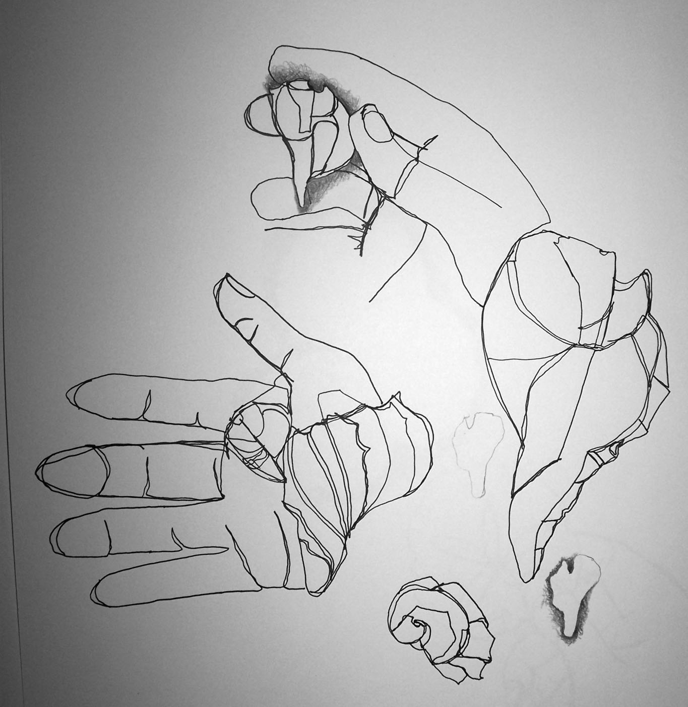 Contour Line Drawing Shell : Contour line and shape shell drawing series started